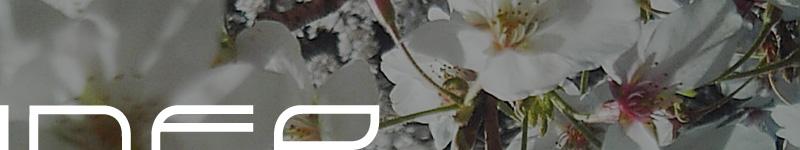 bloom - INFO